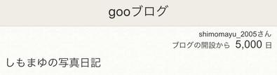 ブログ開設5000日.jpg