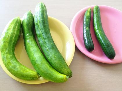 夏野菜③.JPG